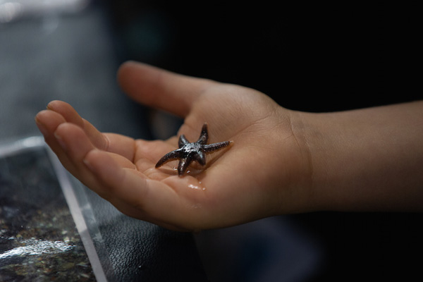 A tiny sea star in a person's hand